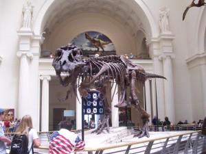 Squelette de Sue au Field Museum à Chicago (2007) ©NelsonWeb